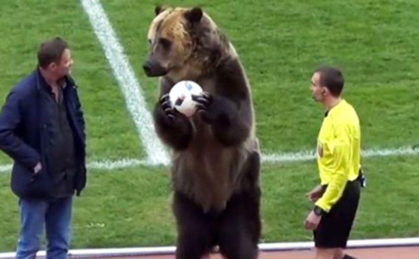 Video of the Week: Only in Russia – a Brown Bear Being Used as Ball Kid.